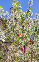 Colourful easter eggs on blooming tree