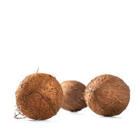 Three shaggy coconuts on white background, square