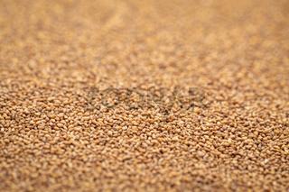 brown teff grain background