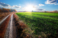 Road near field of winter crop