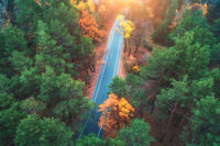 Aerial view of road in beautiful green forest at sunset