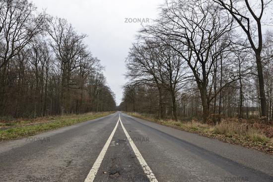 wohin führt der Weg... Hambacher Forst *Nordrhein-Westfalen*