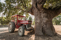 Tractor Parked Under a Plane Tree on a Village Square
