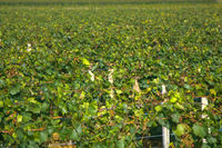 world famous wine industry of France
