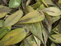 pile detail of leaves