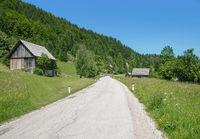 auf der Pokljuka-Hochebene,Triglav Nationalpark,Slowenien