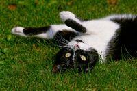1 BA Katze im Gras 0084.jpg