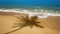 beach with palm tree shadow