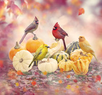 Fall background with birds and pumpkins