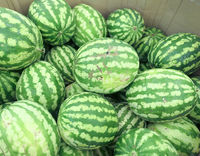 Watermelons in shop