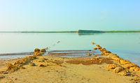 Salt lake in Larnaca