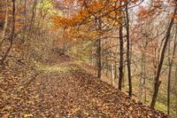 Autumn forest path