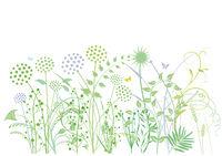 Gras-Pflanzen.jpg