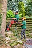 Two arborists work together at tree in garden