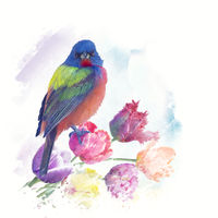 Male Painted Bunting watercolor