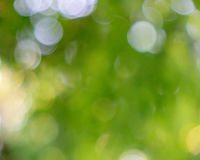 A light green blurred background of green trees in a spring park with a bright bokeh effect.