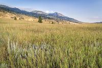 grass in Colorado foothills of Rocky Mountains