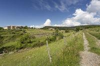 Feldweg in der Ardeche mit frühlingshafter Vegetation