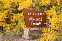 Fall Comes Bringing Yellow Leaves to Lewis & Clark National Forest