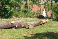 Zersägter Baumstamm nach einem Sturm