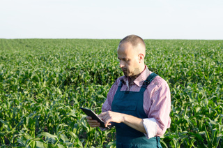 Farmer with tablet computer inspecting corn field summer sunny day