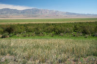 Floodplain birch forest in Khovd aimak in Mongolia