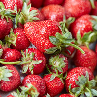 Freshly picked ripe strawberries with green stems. Healthy organic berry. Top view