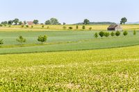 agricultural scenery at spring time
