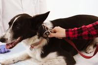 Cute dog at veterinarian.