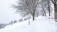snowy winter scenery