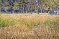 rural landscape of northern Colorado
