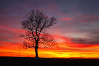 Lonely tree in dramatic sunset, Central Bohemian Upland, Czech Republic