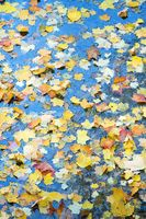 Hot yellow autumn leaves in cold water