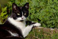 Hauskatze im Garten