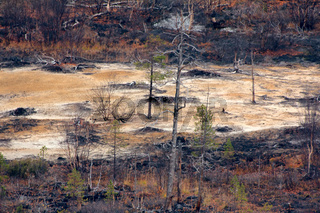 dark mountain forest near Arctic circle.