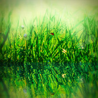 Beautiful fresh morning dew droplets on a grass and ladybug. Water reflection, light. Macro. Shallow depth. Template for design greeting card. Soft toned. Nature square background