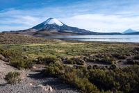 Snow capped Parinacota Volcano reflected in Lake Chungara, Chile