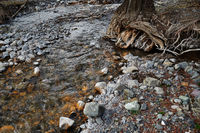 River bed with rocky stones and old tree