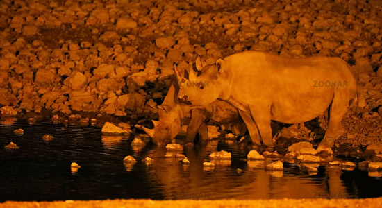 Spitzmaulnashorn am Wasserloch in der Nacht, Etosha-Nationalpark, Namibia, (Diceros bicornis) | Black rhino at night, Etosha National Park, Namibia, (Diceros bicornis)