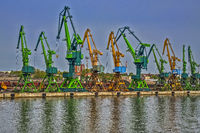 Bank Of Cranes In The Harbour Klaipeda, Lithuania