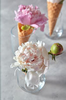 Blooming white and pink piones with bud, green leaf in a glass, wafer cones on a gray table.