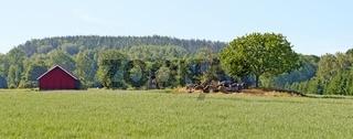 Landschaft mit Haferfeld