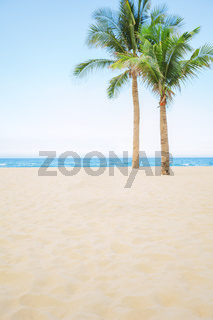 Abstract photo of palm tree on empty tropical sea beach