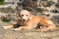 Portriat little cross breed dog