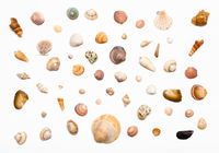 collage from natural dried sea shells on white
