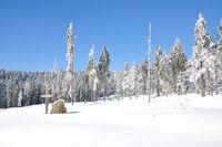 am Bretterschachten bei Bodenmais,Bayerischer Wald,Niederbayern,Deutschland