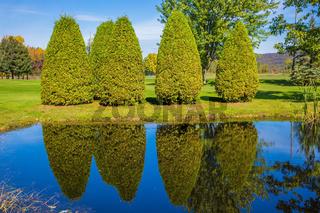 Quiet pond with water mirror