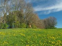 Jagdkanzel an Frühlingswiese, Bockjagd