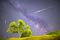 Green tree Milky way night sky falling stars