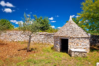 Olive tree field and Istrian Kazun stone hut view